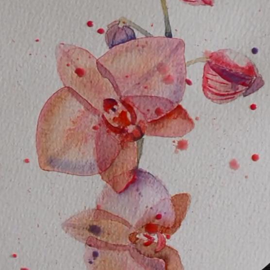 Comment peindre une orchid e l 39 aquarelle avec l 39 artiste cindy barillet - Le geant des beaux arts bordeaux ...