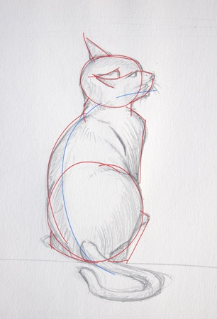 Les étapes importantes pour dessiner le chat assis regardant en l'air