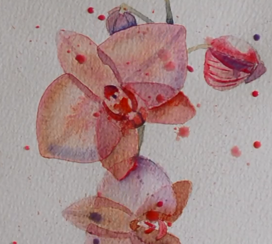 Orchidées à l'aquarelle