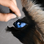 Comment Dessiner Un œil De Chat Aux Pastels Par L Artiste Cindy Barillet