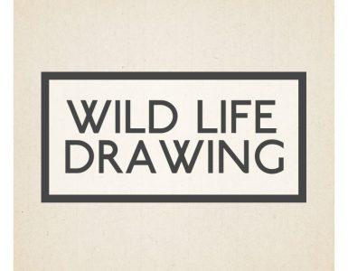 Wild Life Drawing