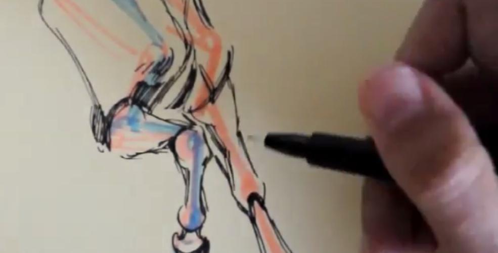 Structure équine - dessiner les antérieurs d'un cheval par Charly Debray