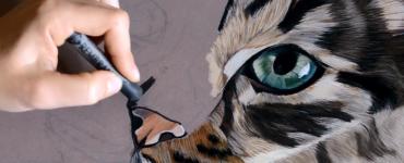 truffe de chat réaliste aux pastels par Cindy Barillet