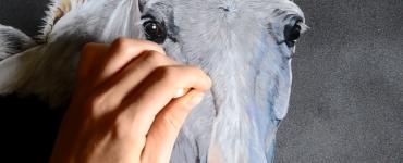 Cheval gris aux pastels