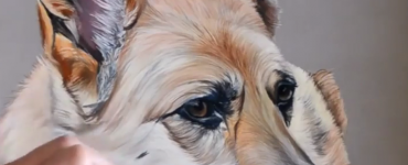 Speed drawing _ Berger allemand aux pastels secs avec l'artiste Cindy Barillet