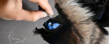 oeil-chat-bleu