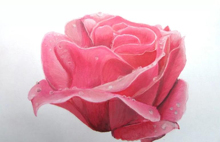 Dessiner une rose aux ProMarker par Cindy Barillet