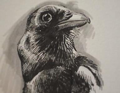 Oiseau aux Faber Castell par Charly Debray