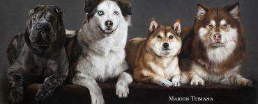 Portrait des chiens aux pastels par Marion Tubiana